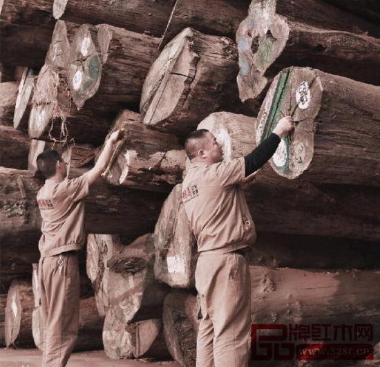 国寿红木选用的缅甸花梨木料都是大料