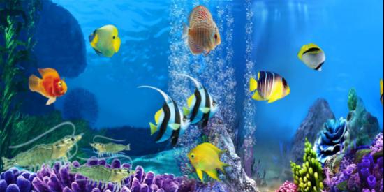 壁纸 海底 海底世界 海洋馆 水族馆 550_275
