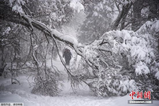 app彩票软件哪个正规:莫斯科降雪破纪录_造成100多起树倒砸车事件