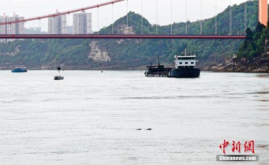 北京赛车冠亚和大2.3倍:江豚现身长江宜昌_已被列入_红色名录极危物种
