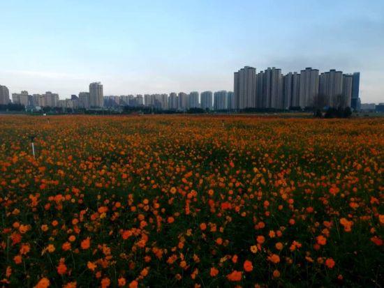 沈阳沈北新区3000亩花海公园向游客免费开放