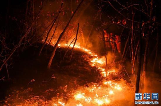 内蒙古大兴安岭毕拉河林业局大北河林场发生森林火灾