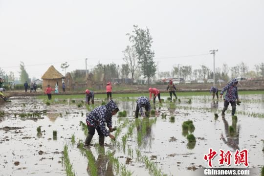 中国盘锦第四届插秧节