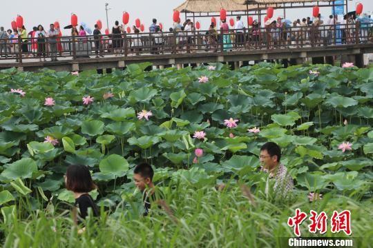 第三届沈阳辽中珍珠湖荷花节千亩荷花菱藕飘香