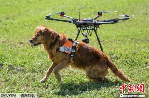 """搜救犬""""汇报工作""""秀技能 与无人机默契合作"""