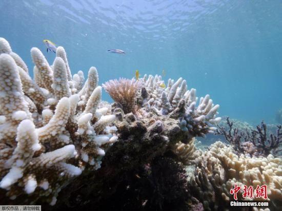 大堡礁是世界上最大的珊瑚礁生态系统,从昆士兰北部的约克角半岛