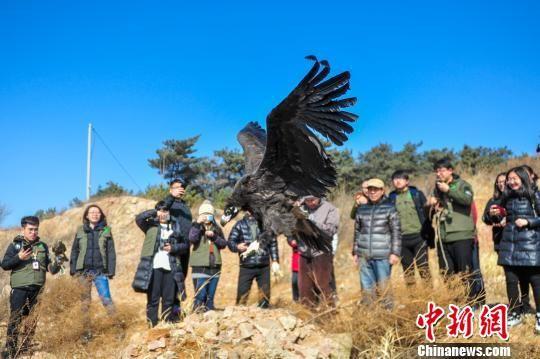 澳门游戏厅网址:沈阳举行野放活动_5只保护动物重新飞上蓝天