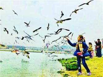 千名市民参与 关爱海鸟公益活动