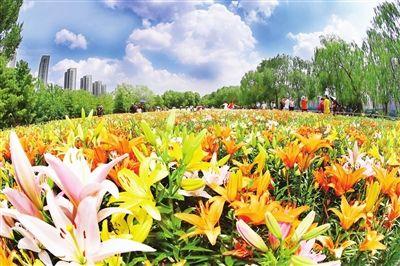7月21日,记者在沈阳浑河岸边的沈水湾公园和长白岛森林公园看到,数万