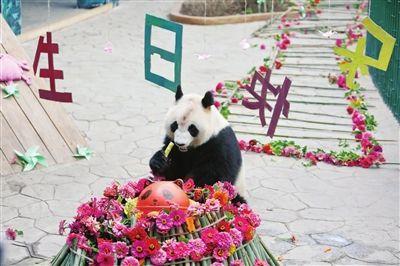 """大熊猫冰华四岁啦 上百游客""""陪""""庆生"""
