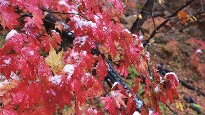 辽入秋后首场雪 比去年早一个月