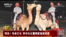 """阿联酋警察成立""""骆驼巡逻队"""""""