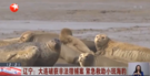 辽宁大连破获非法猎捕案 紧急救助小斑海豹