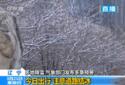 辽宁多地降雪 气象部门发布多条预警