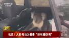 """大胆考拉为避暑""""拼车蹭空调"""""""