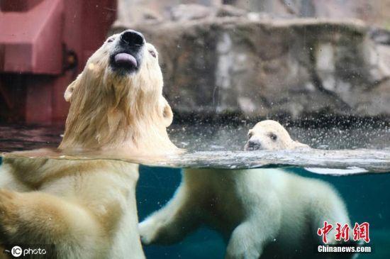 德��北(bei)�O熊(xiong)������(hu)外探�U 和母�H嬉��(xi)游泳萌萌�}