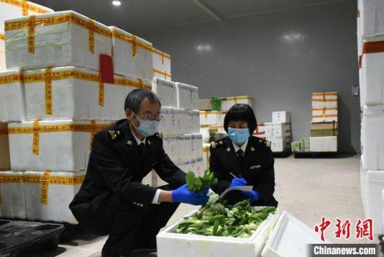 "10.35�f��蔬菜出口�^""�(yue)""不�^夜"